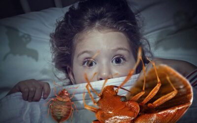 Punaises de lit, cauchemars de vos nuits