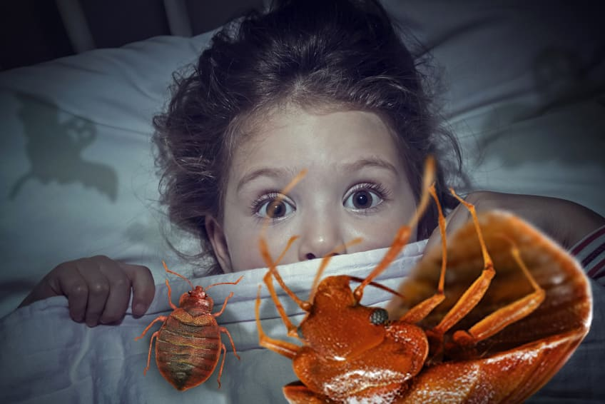 punaises de lit cauchemarrd